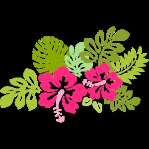 Blumen Hawaii tropisch Hibiskusblüte Hibiskus pink