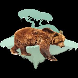 Bär , Braunbär , Bear