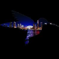 Kolibri 'Skyline'