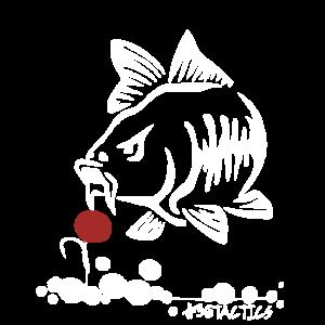 POP UP BOILIE - KARPFEN ANGELN - CARP FISHING
