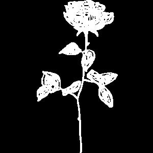 OG weiße Rose.