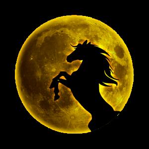 Vollmond Pferd
