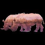 Nashorn Alpen