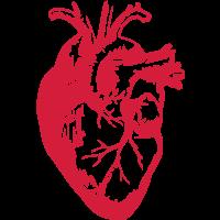 Herz Realistisch / Medizin