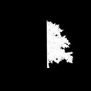 Baum Baum Schwarz Weiß Illusion