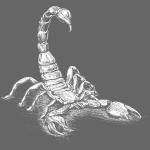 Skorpion in Weiß