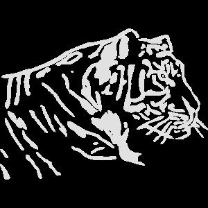 Tiger, Raubkatze, Idee, Geschenk