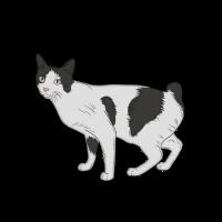 Katze Hauskatze klassich