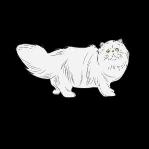 Katze Langhaar Katze