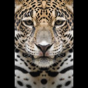 Jaguar Aufzeichnungen
