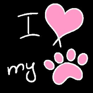 Katze Hund Liebe Haustier Mädchen Weibchen Pfote