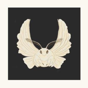 Papillon de nuit fond noir