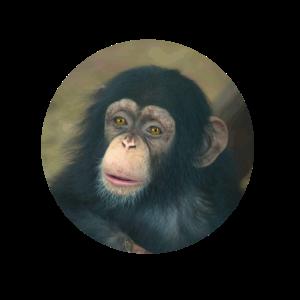 Tierkind Schimpanse Baby Affe