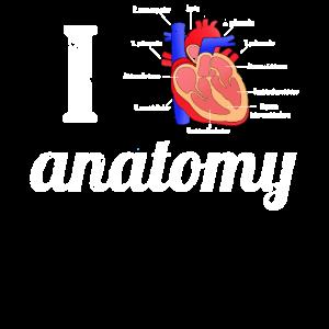 Ich liebe Anatomie Anatomisches Herz