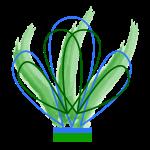 fiore tratto verde