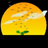 Sonne Kaktus