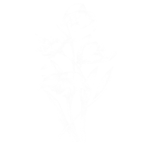 Zarte weiße Blumen