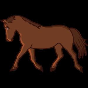 Pferd im Galopp Pferderasse Warmblut Kaltblut