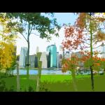 trees skyline newyork