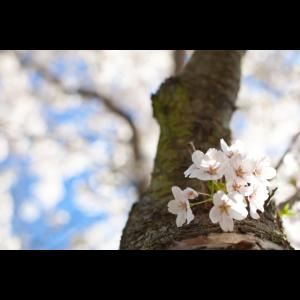 Frühling 1.0