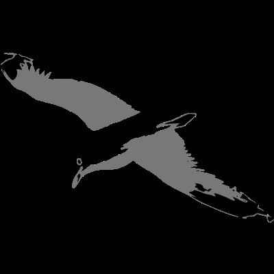 Möwe - Möwe im Flug! - wangerooge,sylt,strand,spiekeroog,langeoog,cuxhaven,borkum,baltrum,amrum,Watt,Strandkorb,Strand,Ostsee,Nordsee,Möwe,Langeoog,Juist,Flut,Ebbe,Cuxhaven,Borkum,Baltrum,Amrum
