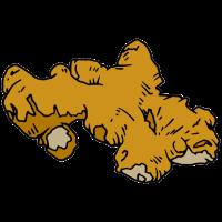 Ingwer wurzel essen gesund bio oeko