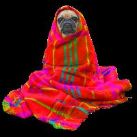 Blanker Hund