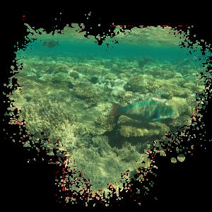 Fisch Meer Splatter Fleck Splash Spritzer
