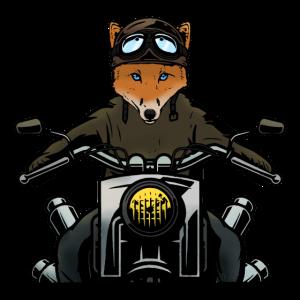 Fuchs der Motorradfahrer