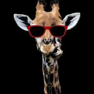 Giraffen Tier Giraffe witzig Hals Geschenk