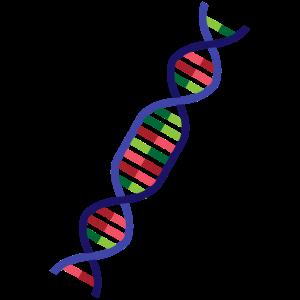 DNA DNS Biologie Wissenschaft Medizin