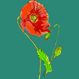 Mohnblüten,Poppy
