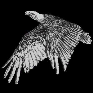 Adler gezeichnet