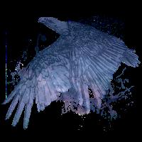 Space Adler - abstrakt