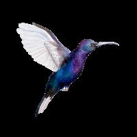 Summenvogel-nettes Vogel-Liebhaber-Geschenk-Grafikdesign