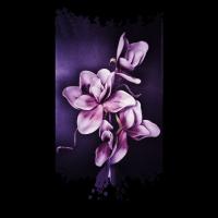 Magnolie Lila Violett