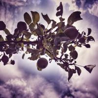 Birnen und Himmel