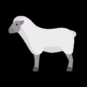 weißes Wolken-Schaf
