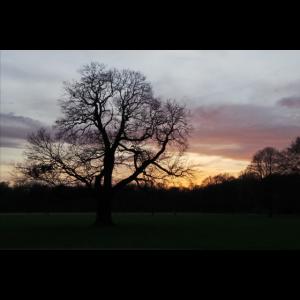 Morgens im Park IV
