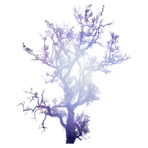 Space Baum