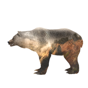 Bär Grizzly Natur Tiere Wald