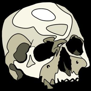 Celled Schädel