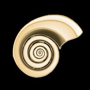 Shell in golden ratio ( Goldener schnitt)