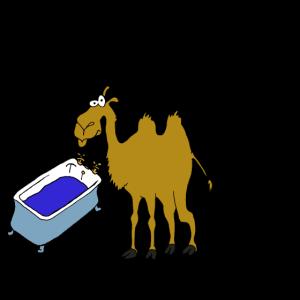 Kamel Durst Trinken Geschenkidee
