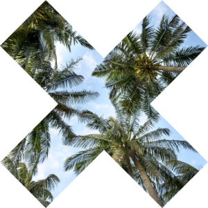 Palmen Kreuz - Sommer Sonne