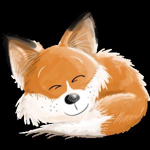 Fuchs ist so Müde - Füchse - Rotfuchs - Schlafen