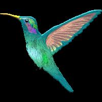 Kolibri Kleinster Vogel der Welt Bienenelfe Nektar