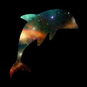 Delfin Fisch Meer Universum