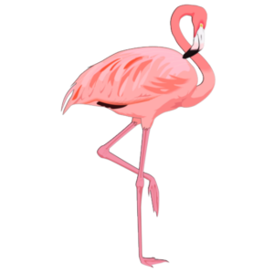 Flamingo-Pink-Kollektion