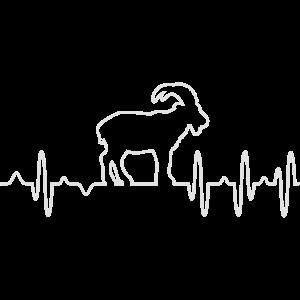 Ziege EKG